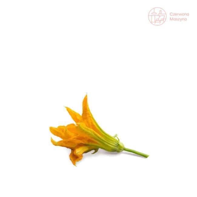 Wkład nasienny Veritable Lingot Kwiaty cukinii