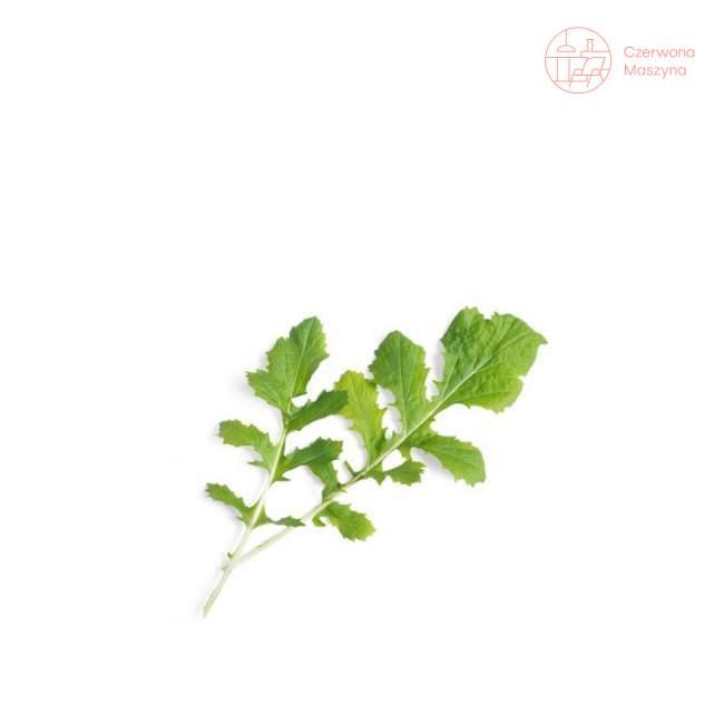 Wkład nasienny Veritable Lingot Namenia sałatkowa
