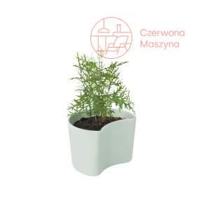 Doniczka Rig-Tig Your Tree z nasionami sosny, green