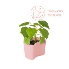 Doniczka Rig-Tig Your Tree z nasionami brzozy, pink