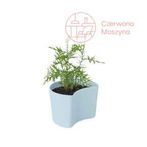 Doniczka Rig-Tig Your Tree z nasionami sosny, blue