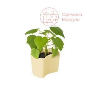 Doniczka Rig-Tig Your Tree z nasionami brzozy, yellow