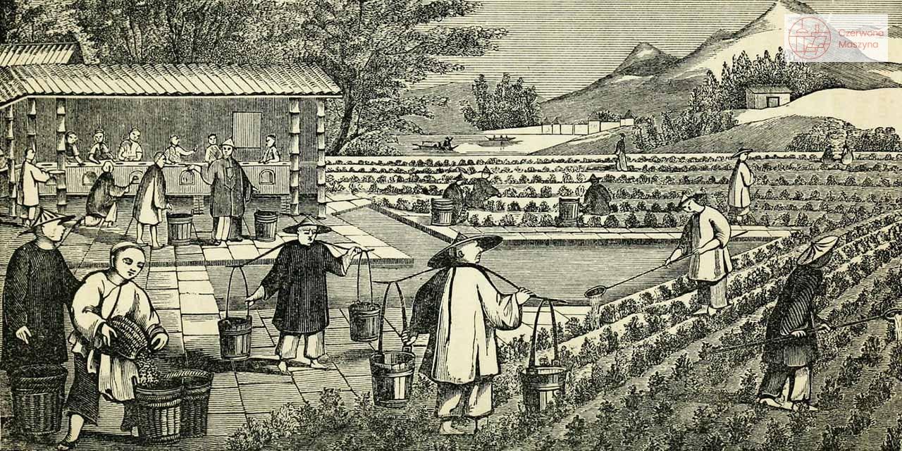 Krótka historia herbaty