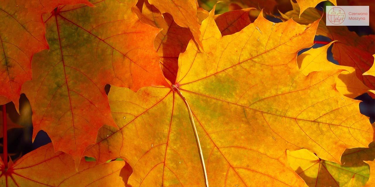 Jesienny stół - liście
