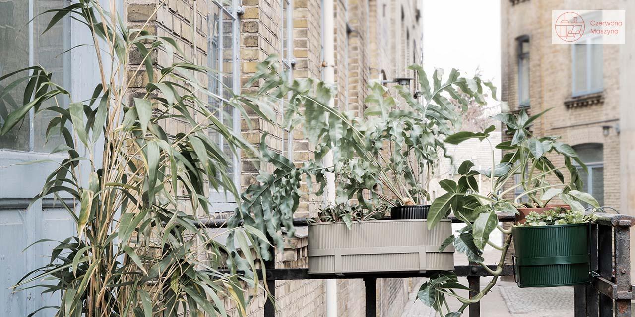 Rośliny na taras i balkon